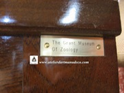 Vign_Armoire_The_Grant_Museum_Zoology